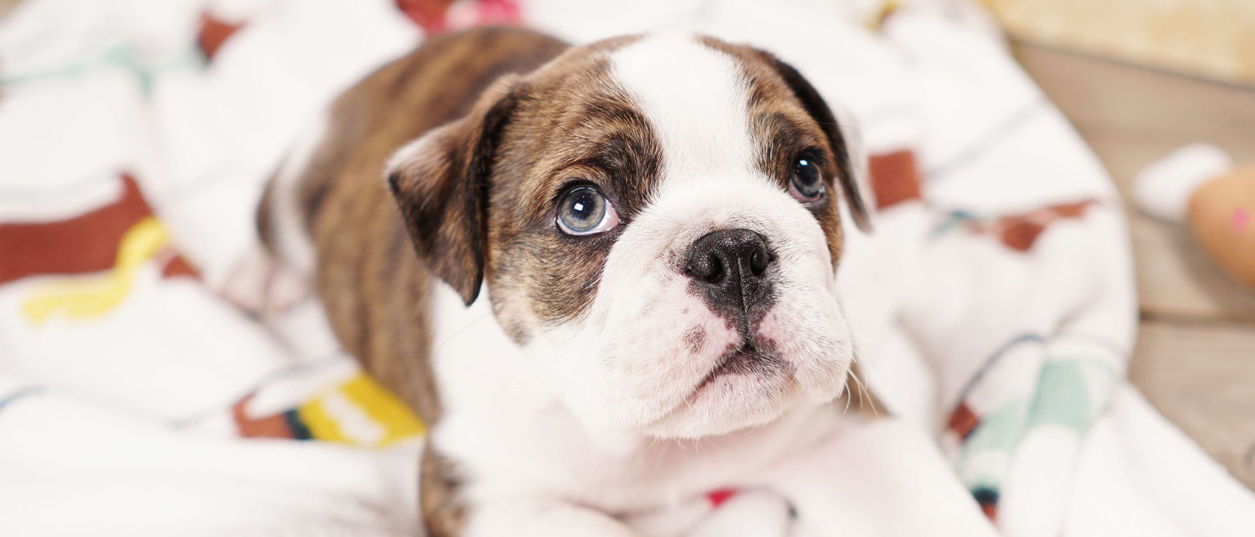 Attention New Pet Owners – 5 Products You Can't Live Without